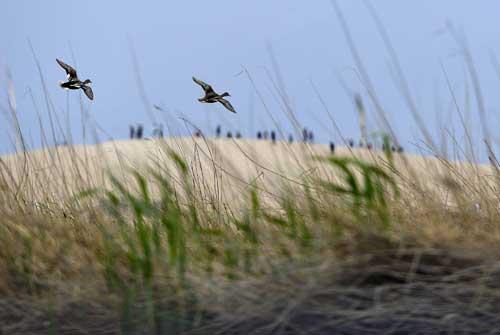春到沙湖万鸟归