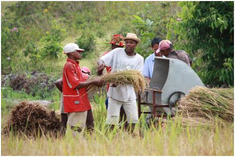 尼日利亚农业战略评估