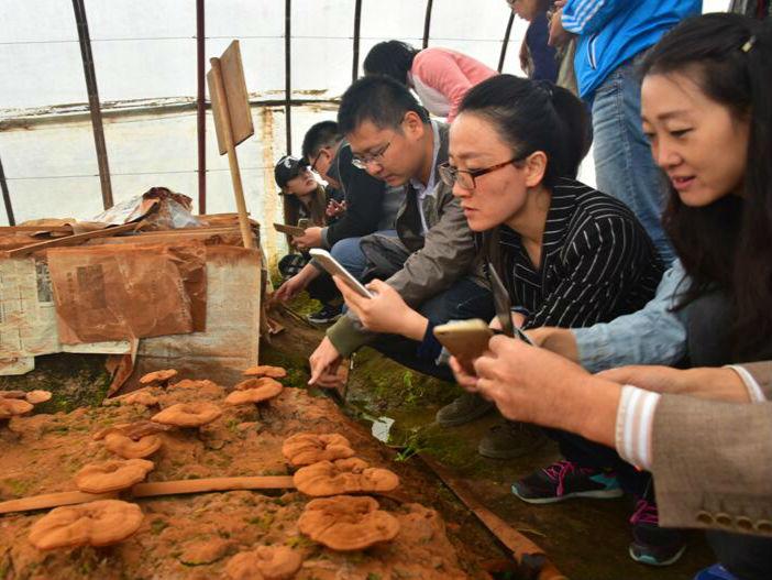 打造生态产业型特色小镇 ——甘肃张掖党寨镇新型城镇化试点建设综述
