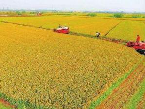 """甘肃省将建设""""十大工程""""推进农业现代化"""