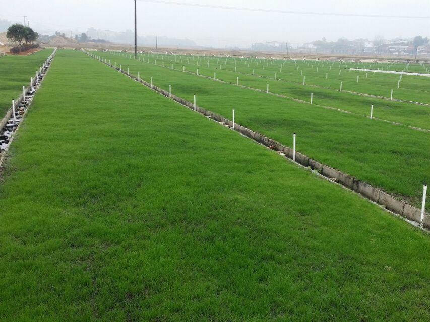 省草产业技术创新战略联盟和协会成立
