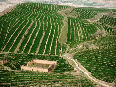 安定区积极发展草畜产业