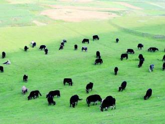 漳县畜牧产业助群众增收