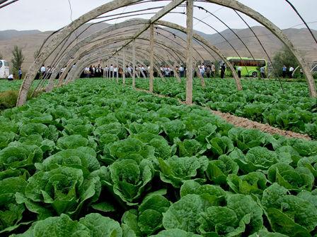 七里河全区蔬菜面积达到13.42万亩
