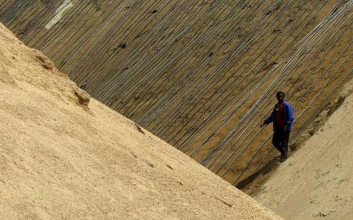 资料:一名工人在苏丹东部红海州的阿里亚布(Ariab)金矿中行走