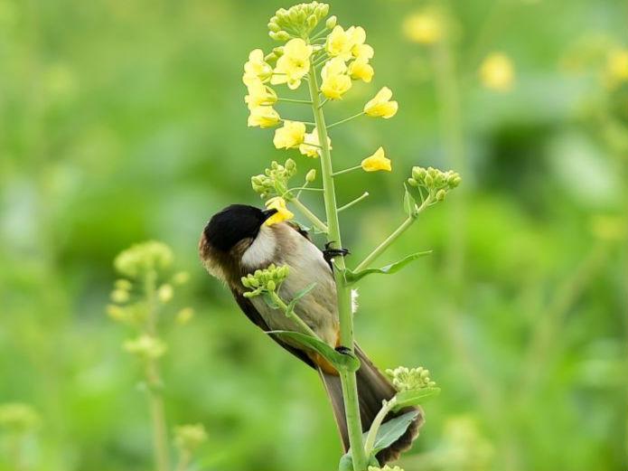 花开引雀来
