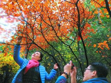 奥森超香山成最受欢迎赏秋地