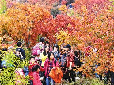 今秋红叶别样美 经济生态两结合