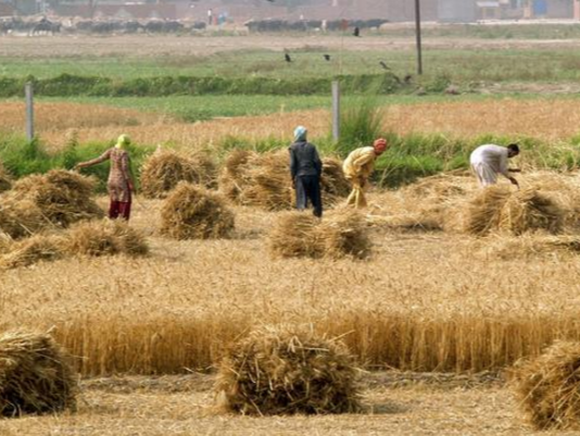 哈萨克斯坦农业领域投资逐年增长