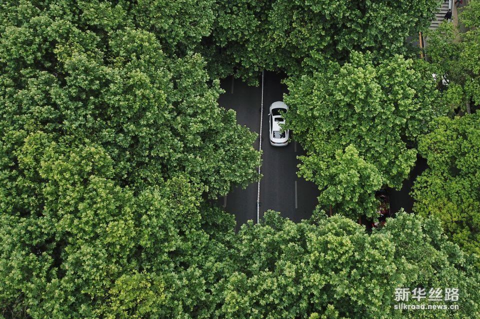 一辆汽车从贵阳市北京路驶过(5月23日无人机拍摄)。新华社记者 欧东衢 摄