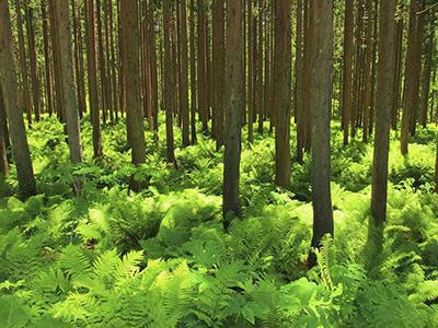 我国林业产业总产值已超7万亿元 带动5200万人就业