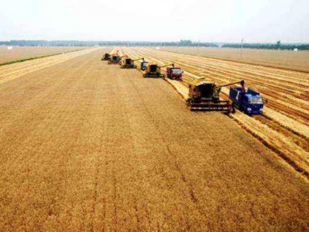 2018年上半年,塔吉克斯坦农业商品产值同比增长8.5%