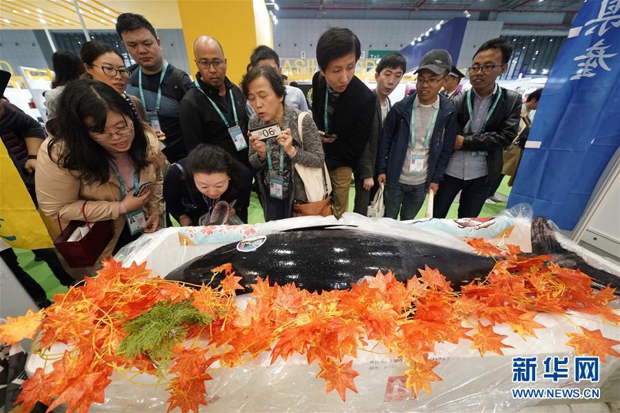 11月7日,参观者在进博会食品及农产品展区观看一条日本长崎产的蓝鳍金枪鱼。  新华社记者 沈伯韩 摄
