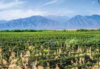 宁夏贺兰山东麓葡葡酒推介活动在杭州举行