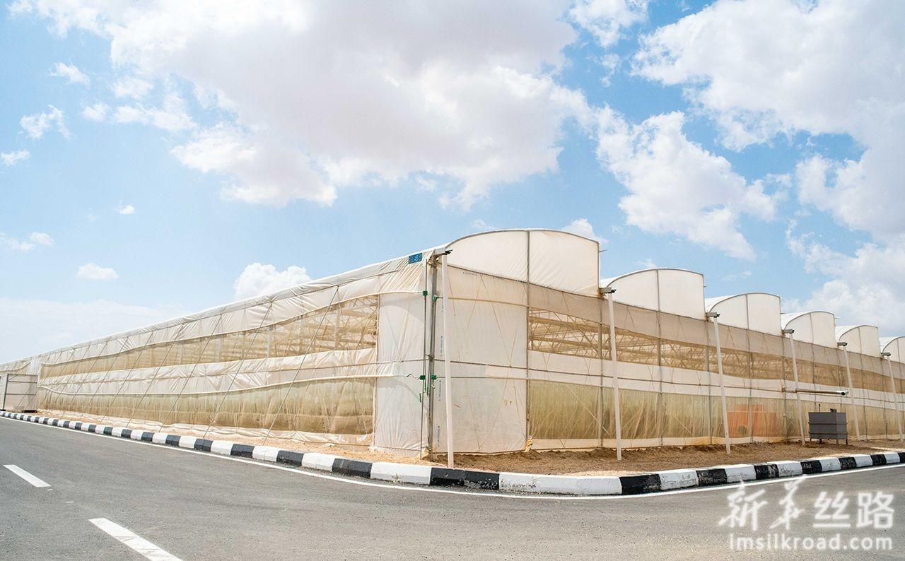 3月25日在埃及首都开罗东北约90公里的斋月十日城拍摄的温室大棚。新华社记者 邬惠我 摄
