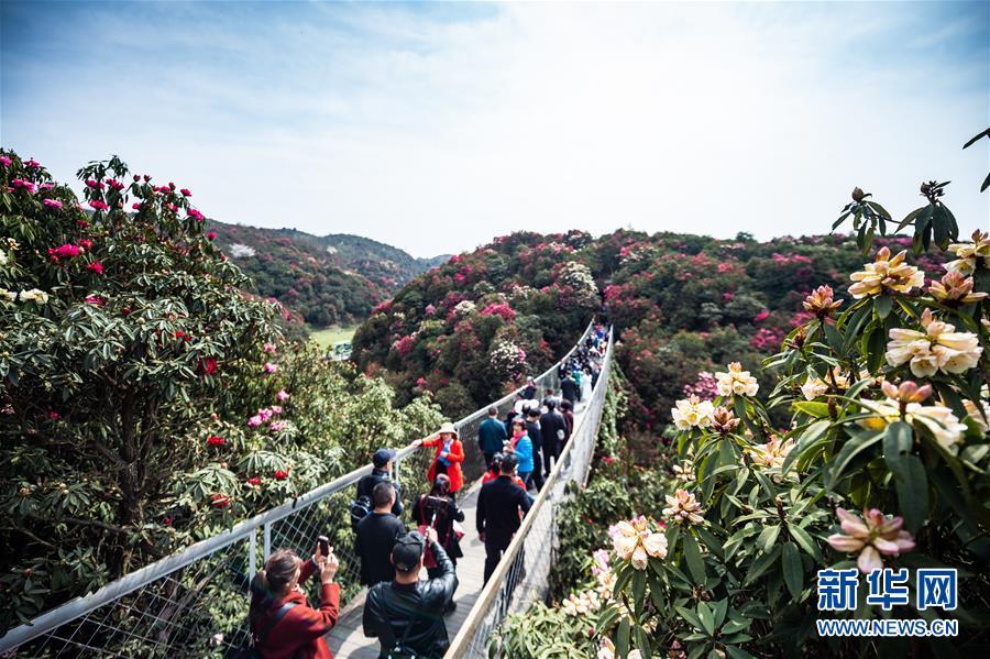 游客在贵州毕节市百里杜鹃景区游玩(3月28日摄)。新华社记者 陶亮 摄