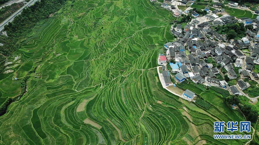 这是贵州省丹寨县龙泉镇高要梯田(7月1日无人机拍摄)。新华社记者 欧东衢 摄