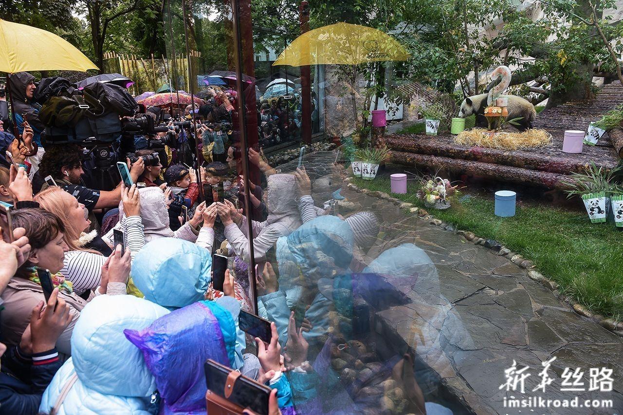 """7月31日,在俄罗斯首都莫斯科,人们观看大熊猫""""丁丁""""。新华社发(叶甫盖尼·西尼岑摄)"""