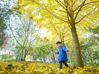 北京玉渊潭公园推出7大赏秋景点