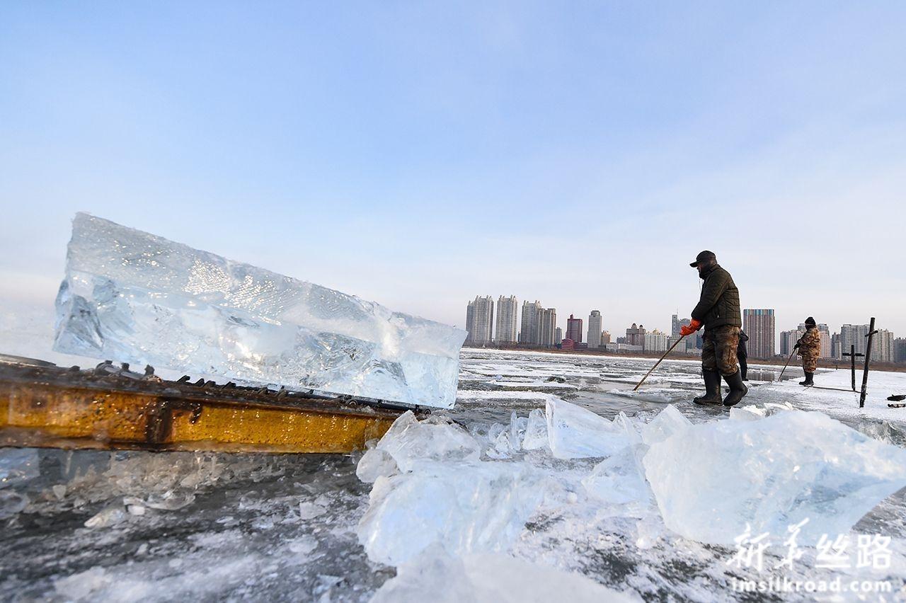 12月11日,在松花江哈尔滨段,工人进行采冰作业。