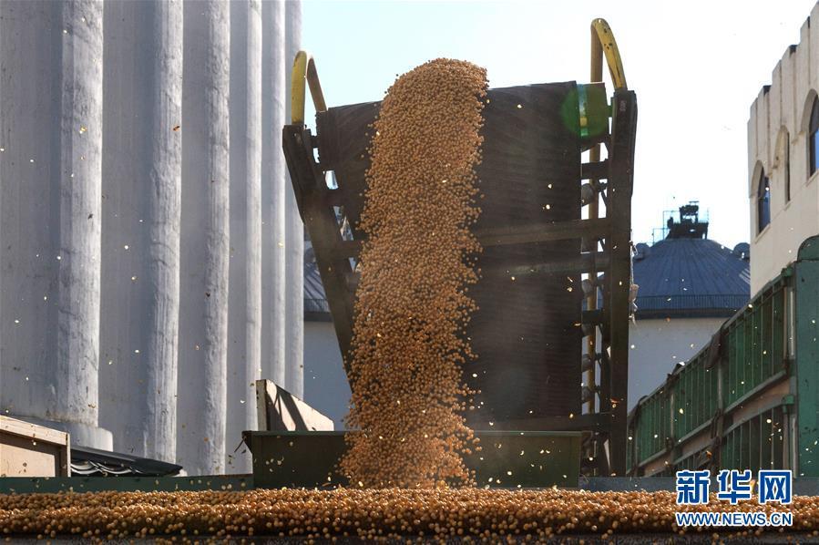 黑龙江:新粮收购有序展开