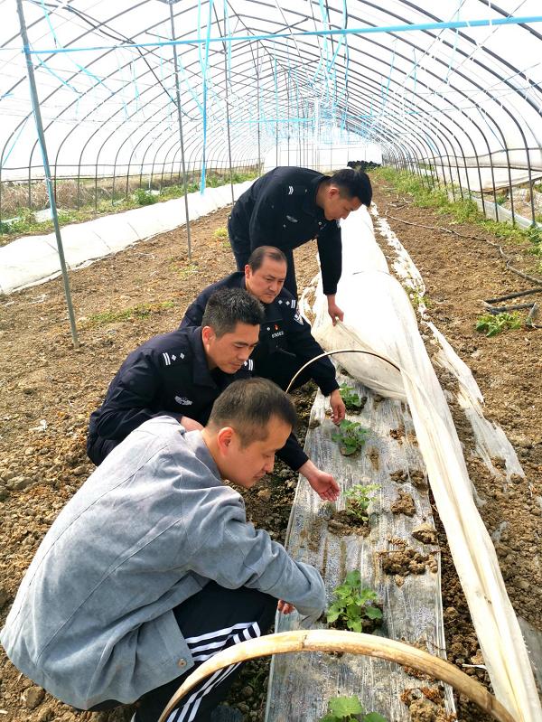 """安徽和县:""""警察蓝""""助力贫困村复工复产""""春天绿"""""""