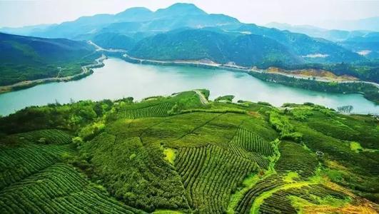 孙志刚:提高茶叶品牌价值 大力发展生猪集中养殖