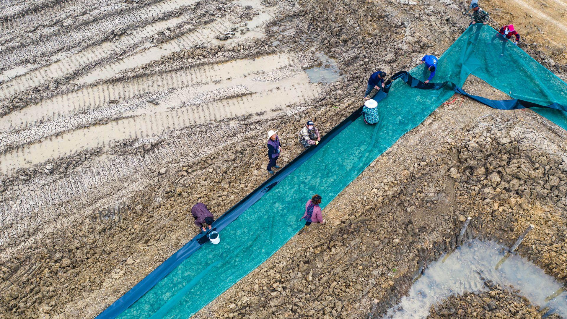 安徽五河:稻虾蟹连作  一田双收促转型