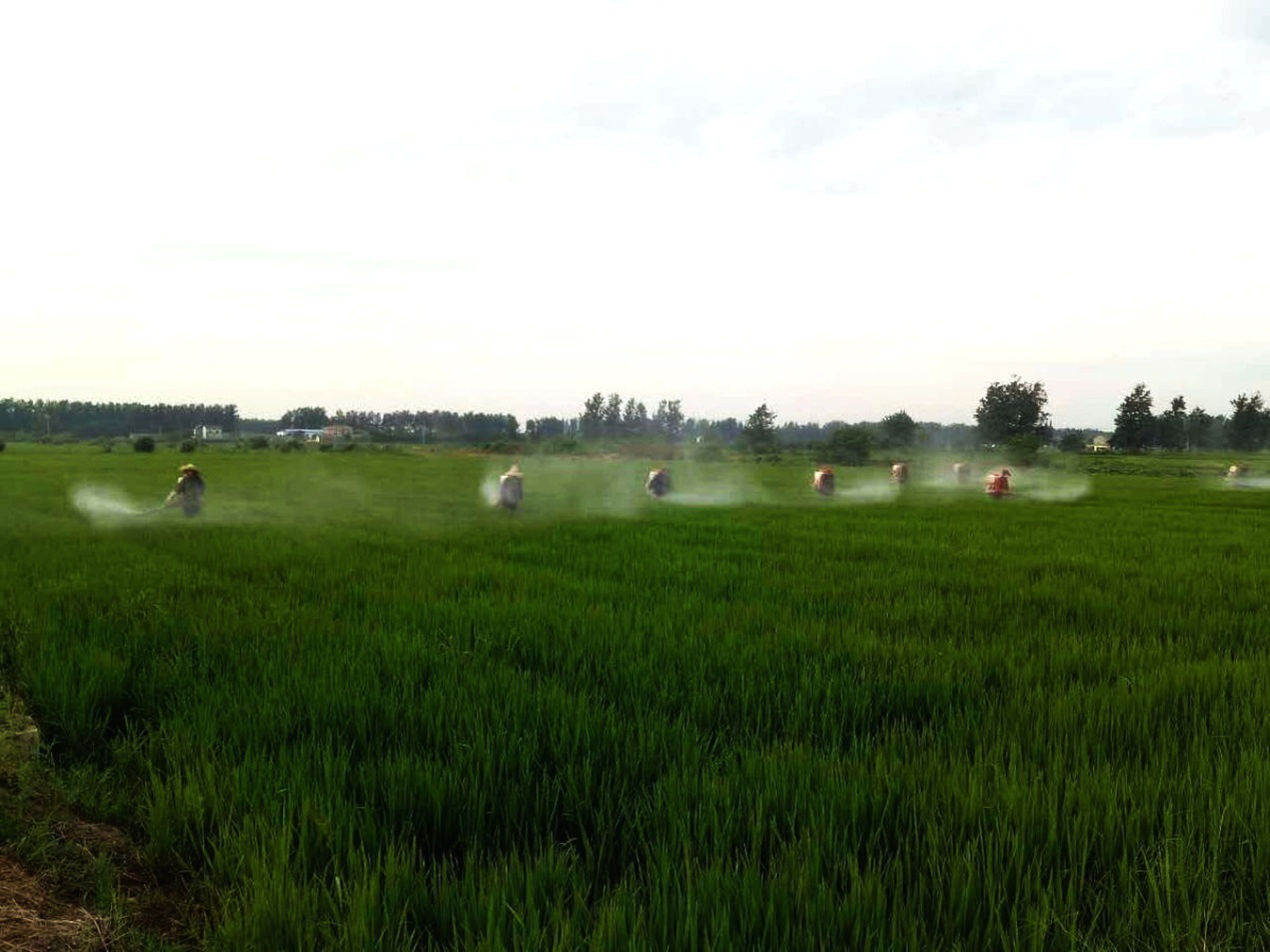 安徽天长:合作社农事托管服务助力春耕