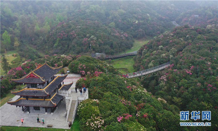 3月28日,航拍游人在贵州百里杜鹃金坡景区赏花游玩。新华网 卢志佳 摄
