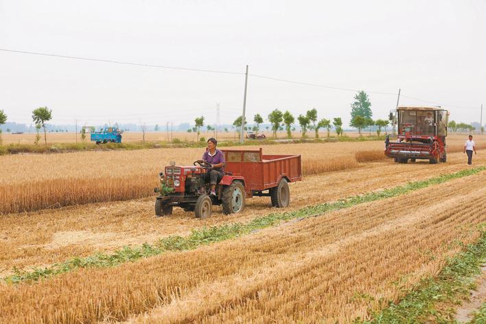 安徽濉溪:瓜秧爬上麦秸秆   调整种植结构促进村民增收