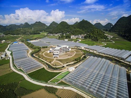 贵州省中药材产业产值同比增长82.4%