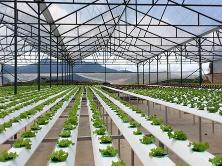 2020东盟轮值主席年:俄罗斯愿与越南和东盟扩大农业领域的合作范围