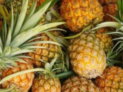 缅甸向新加坡出口20吨有机菠萝