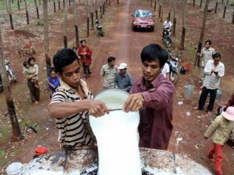 2020年前5月柬埔寨全国橡胶出口达9万7175吨