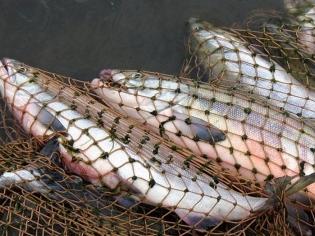 哈萨克斯坦上半年全国农林渔业投资额超5.5亿美元