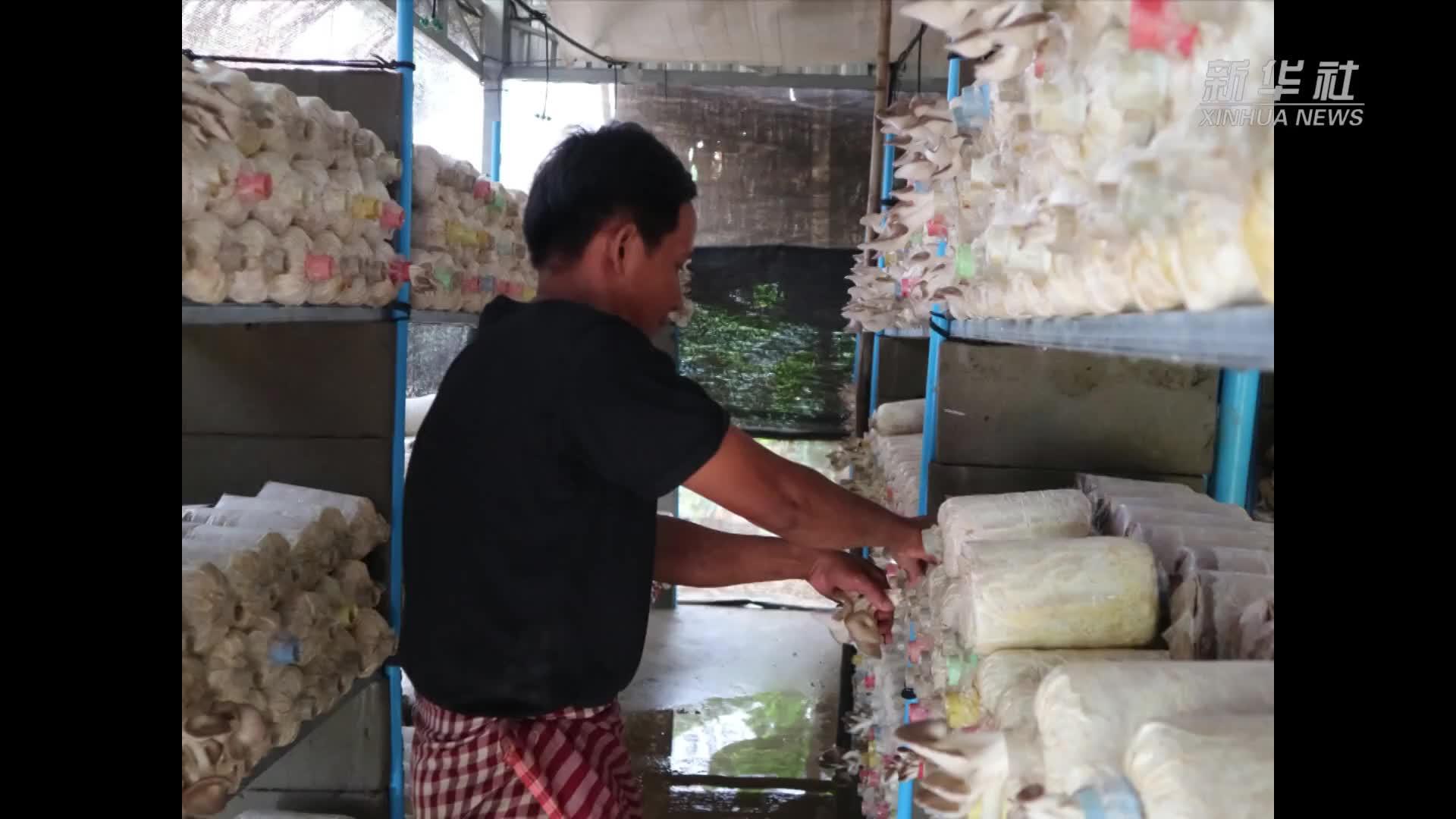 中国援柬减贫示范项目促当地农村持续发展