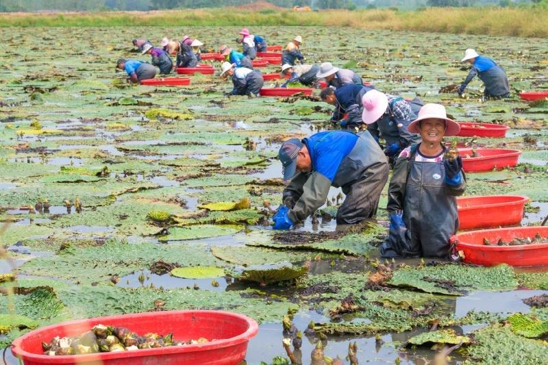 滁州琅琊区:扶困出实招 幸福来敲门