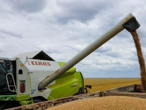 哈萨克斯坦计划将今年收获的谷物出口至中亚国家