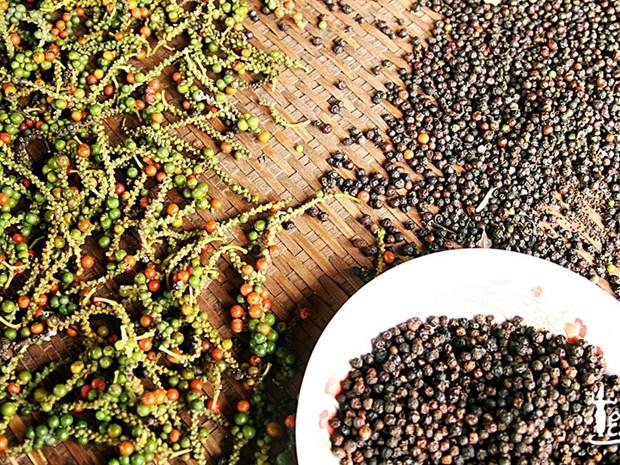 越南胡椒出口呈现积极复苏迹象