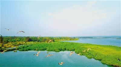 临高县新盈镇彩桥红树林风景如画. 曾红流 摄