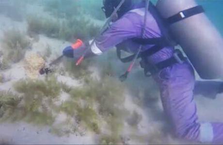为珊瑚搬新家 哈电建设项目注重保护当地生态环境