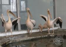快來看看長春動植物公園的熱帶動物咋過冬