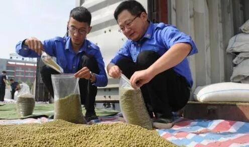 中国首趟进口乌兹别克斯坦绿豆专列在西安港开箱查验2