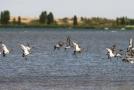 库布其沙漠治理成果——生物多样性