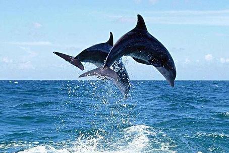 海洋环境保护图片