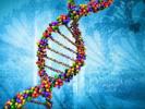 记者从西安交通大学第二附属医院生物诊断治疗国家地方联合工程研究中心获悉,该中心孔光耀教授团队研究发现了一种可以杀伤骨髓增殖性肿瘤细胞的新策略,或将为该类髓系白血