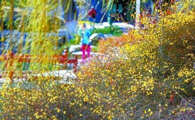 植物园专家教您看花找不同