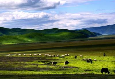 上半年甘肃共接待游客8730万人次  实现旅游综合收入533.7亿元