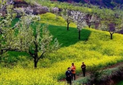 甘肃将多途径融合农村产业